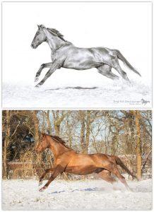 zeichnen, Zeichnung, Pferd, Pferde, Pferdezeichnung, Buntstift, Buntstiftzeichnung, Bleistift, Bleistiftzeichnung, Pastell, Pastellzeichnung, Tierzeichnung, Tierportrait