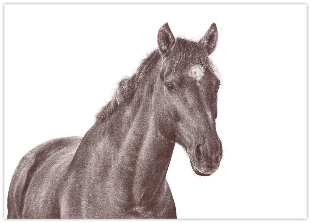 Zeichnungen nach Fotovorlage Zeichnungen nach Foto Zeichnung zeichnen Tierzeichnungen Tierzeichnung Tier zeichnen lassen Tierportraits Tierportrait Rötelzeichnung Pferdezeichnung Pferdeportrait Pferd PferdLösche Begriff: Pferde Pferde Hochwertige Tierzeichnungen Buntstiftzeichnung Buntstift monochrom Sepia Sepiazeichnung