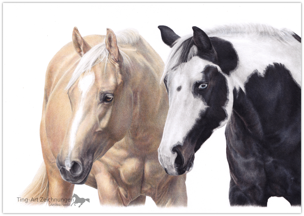Pferdezeichnung Zeichnung Pferde Palomino Pinto Paint