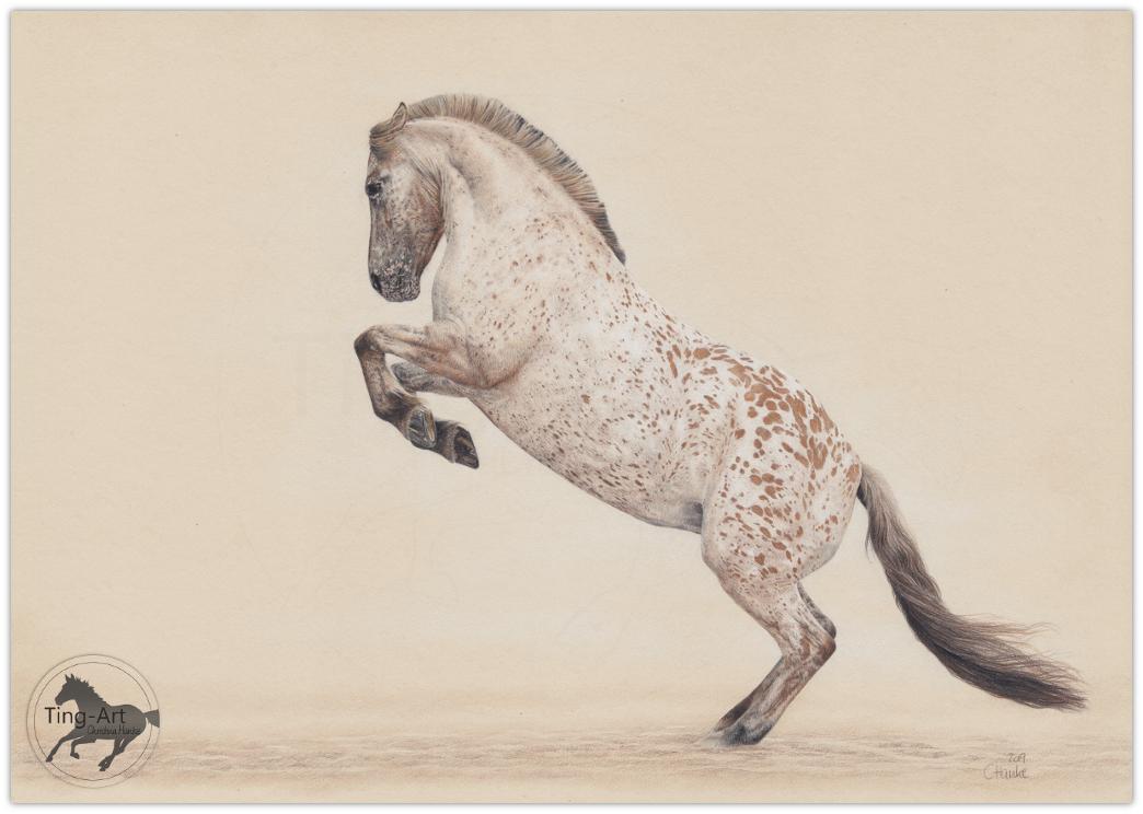 buntstift, Zeichnung, buntstiftzeichnung, Pferdezeichnung, coloured pencils, horse drawing, Tigerschecke, Fjord, fjordpferd, Norweger, tierportrait