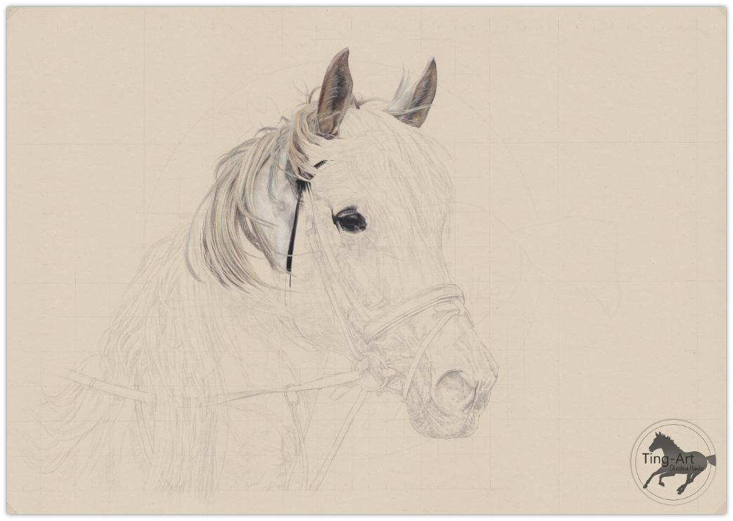Pferd Zeichnen Lassen Archive Christina Hanke